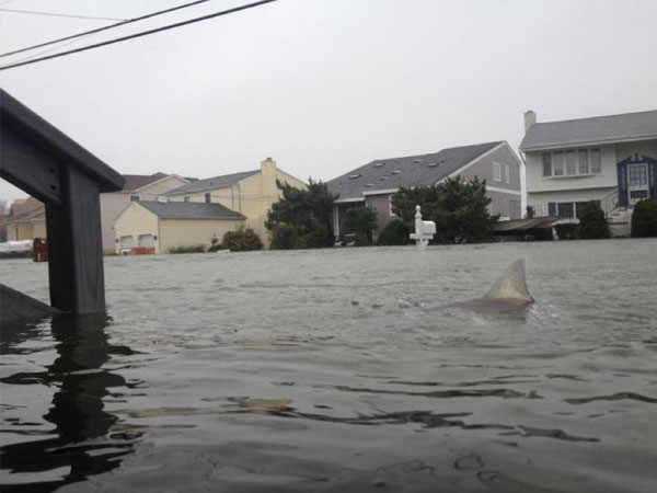 Requin New Jersey